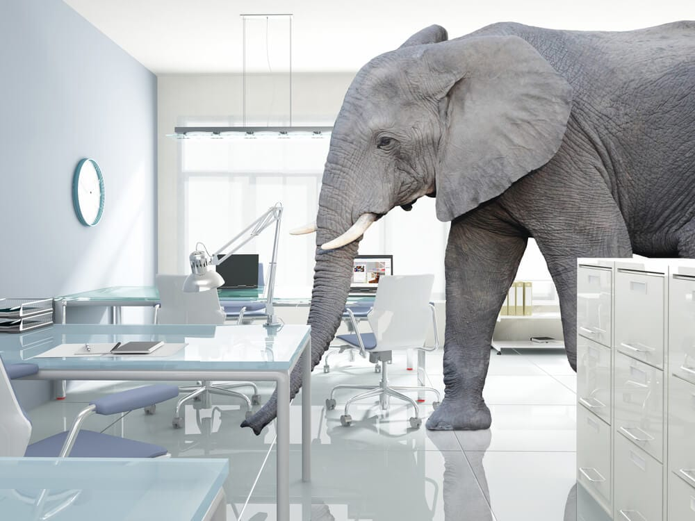elephantinthroom 2 Webinars   Chiropractor Kelowna